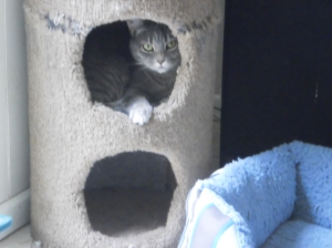 Smokey in Her Hideaway