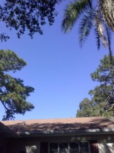 View from My Hammock